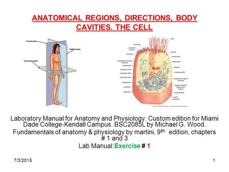 7/3/20151 ANATOMICAL REGIONS, DIRECTIONS, BODY CAVITIES. THE CELL Laboratory Manual for Anatomy and Physiology. Custom edition for Miami Dade College-Kendall.
