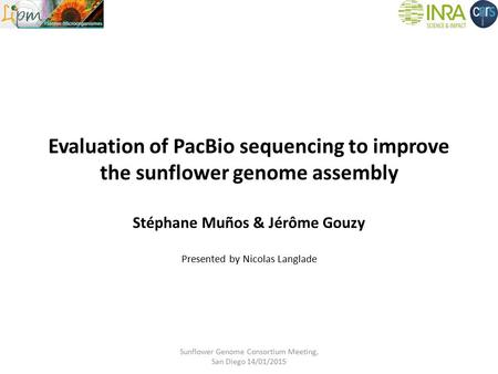 Evaluation of PacBio sequencing to improve the sunflower genome assembly Stéphane Muños & Jérôme Gouzy Presented by Nicolas Langlade Sunflower Genome Consortium.