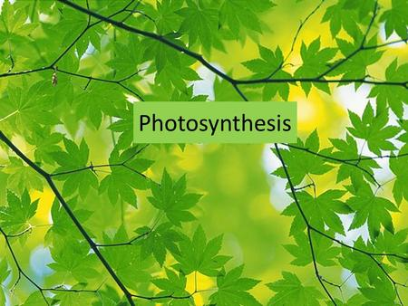 Photosynthesis. Purpose and Reaction Photosynthesis is the process in which plants use sunlight to produce glucose which is food for the plant. This is.