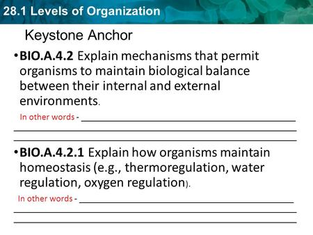 28.1 Levels of Organization Keystone Anchor BIO.A.4.2 Explain mechanisms that permit organisms to maintain biological balance between their internal and.