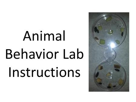 Animal Behavior Lab Instructions. How to perform an Investigation in AP Biology: The Animal Behavior Lab.