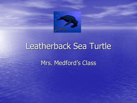 Leatherback Sea Turtle Mrs. Medford's Class. The Leatherback Sea Turtle The leatherback sea turtle is the largest of all turtles. The leatherback sea.