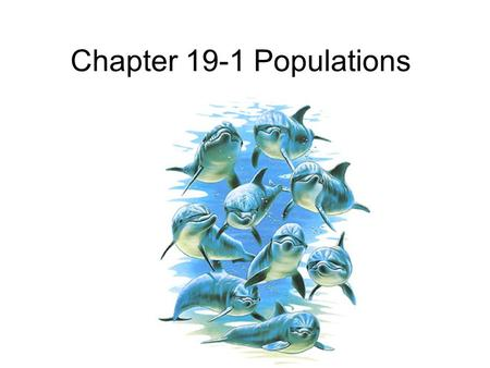 Chapter 19-1 Populations. Objectives Explain the difference between population size, density, and dispersion Describe the three main patterns of population.