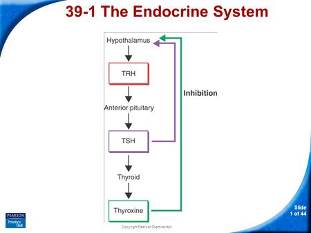 Slide 1 of 44 Copyright Pearson Prentice Hall 39-1 The Endocrine System.