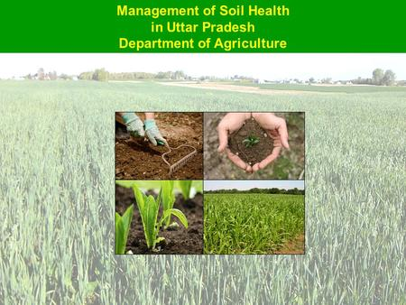 Management of Soil Health in Uttar Pradesh Department of Agriculture.