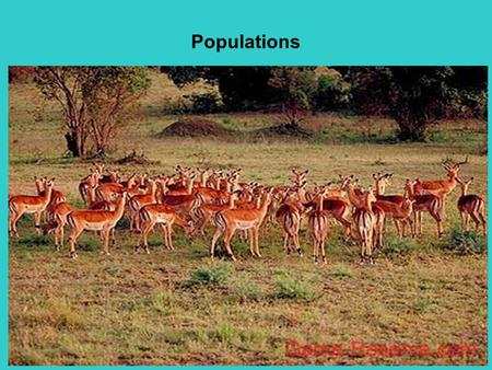 Populations. Populations: groups of individuals that belong to the same species and live in the same area.