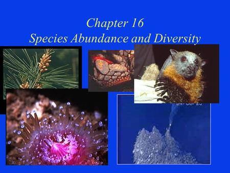 "Chapter 16 Species Abundance and Diversity. 1st Question of the Day Define the term ""Community"""