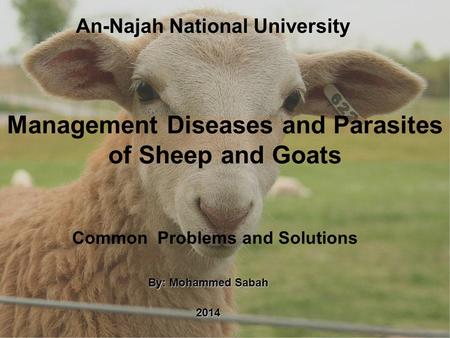 Management Diseases and Parasites of Sheep and Goats By: Mohammed Sabah 2014 Common Problems and Solutions An-Najah National University.