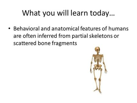 What you will learn today… Behavioral and anatomical features of humans are often inferred from partial skeletons or scattered bone fragments.