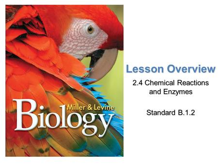 2.4 Chemical Reactions and Enzymes Standard B.1.2