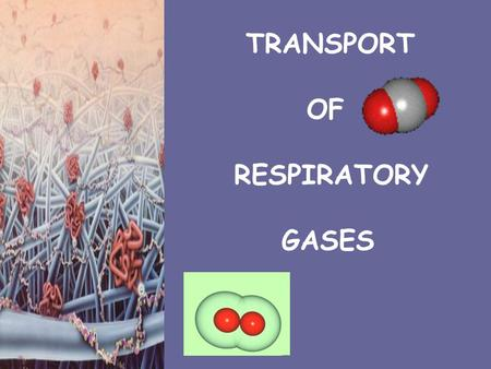 TRANSPORT OF RESPIRATORY GASES.