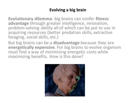 Evolving a big brain Evolutionary dilemma: big brains can confer fitness advantage through greater intelligence, innovation, problem-solving ability all.