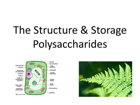 The Structure & Storage Polysaccharides