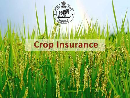 "Insurance programme on ""Individual"" Approach (1972-78). Pilot Crop Insurance Scheme (PCIS, 1979-84) Comprehensive Crop Insurance Scheme (CCIS 1985-1999)."