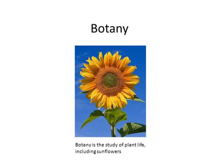 Botany Botany is the study of plant life, including sunflowers.