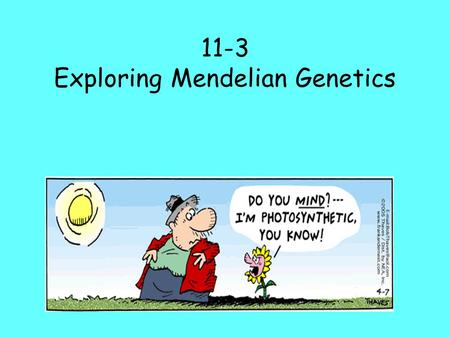 11-3 Exploring Mendelian Genetics. I. Independent Assortment A.Mendel wondered if the segregation(separation) of one pair of alleles (which make up one.