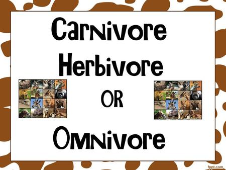 A carnivore is an animal that eats only flesh or meat.