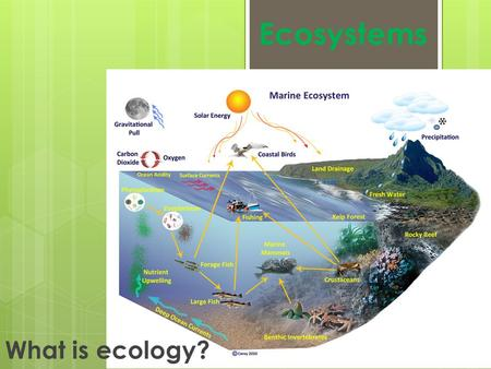 Ecosystems What is ecology?.