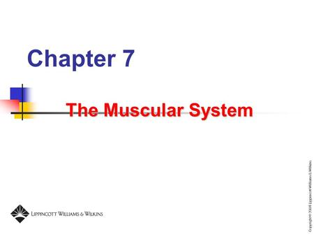 Chapter 7 The Muscular System.