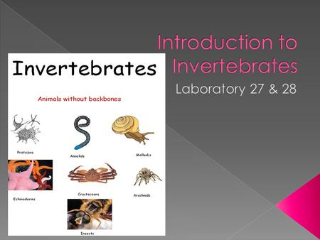  An invertebrate is an animal without a backbone.  The group includes 95% of all animal species.