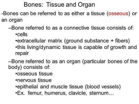 Bones: Tissue and Organ -Bones can be referred to as either a tissue (osseous) or an organ –Bone referred to as a connective tissue consists of: cells.
