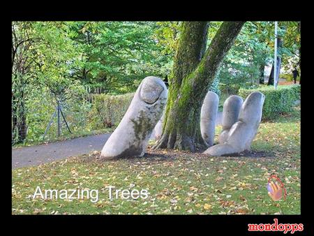 Amazing Trees Trees are the oldest and the largest living things on earth. Some are weird, some extraordinary, some gorgeous, and some shaped by the.