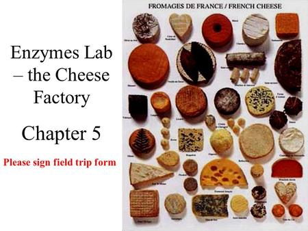 Enzymes Lab – the Cheese Factory Chapter 5 Please sign field trip form.