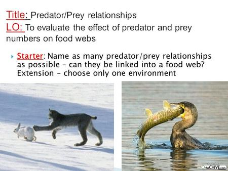 Title: Predator/Prey relationships LO: To evaluate the effect of predator and prey numbers on food webs Starter: Name as many predator/prey relationships.