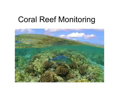 Coral Reef Monitoring. What is a Coral? Animal, vegetable or mineral?