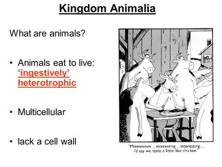 Kingdom Animalia What are animals? Animals eat to live: 'ingestively' heterotrophic Multicellular lack a cell wall.