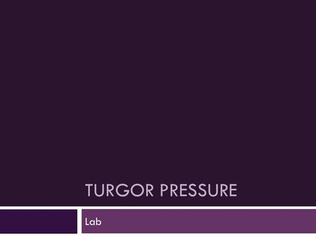 TURGOR PRESSURE Lab. What is Turgor Pressure? Plant cells are very much like your own cells, except they are surrounded by a cell wall. This cell wall.