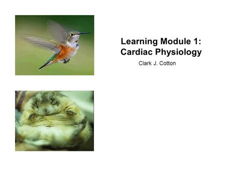 Learning Module 1: Cardiac Physiology Clark J. Cotton.