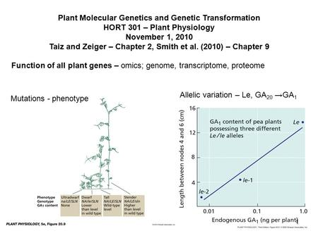 Plant Molecular Genetics and Genetic Transformation HORT 301 – Plant Physiology November 1, 2010 Taiz and Zeiger – Chapter 2, Smith et al. (2010) – Chapter.