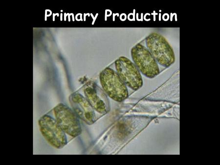 Primary Production. Production: Formation of Organic Matter Autotrophic Organisms (Plants, algae and some bacteria) –Photosynthesis –Chemosynthesis CO.
