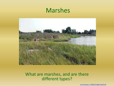 Marshes What are marshes, and are there different types? www.fws.gov/.../Fall04/images/marsh.gif.