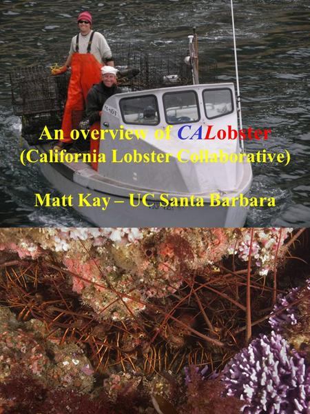 An overview of CALobster (California Lobster Collaborative) Matt Kay – UC Santa Barbara.