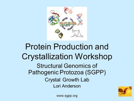 Protein Production and Crystallization Workshop Structural Genomics of Pathogenic Protozoa (SGPP) Crystal Growth Lab Lori Anderson www.sgpp.org.