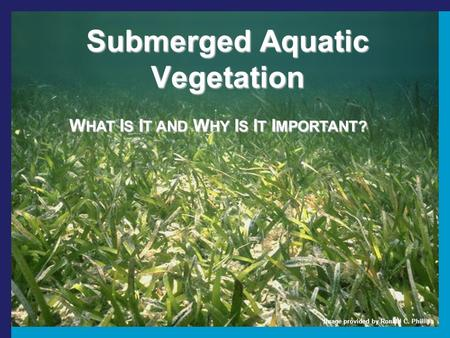 Submerged Aquatic Vegetation W HAT I S I T AND W HY I S I T I MPORTANT? Image provided by Ronald C. Phillips.