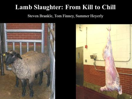 Lamb Slaughter: From Kill to Chill Steven Brankle, Tom Finney, Summer Heyerly.