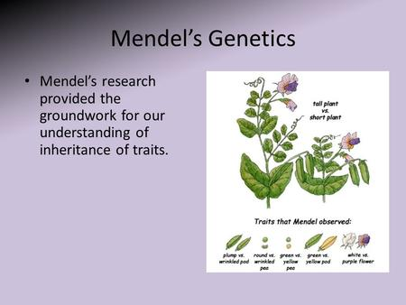 Mendel's Genetics Mendel's research provided the groundwork for our understanding of inheritance of traits.