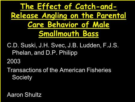 1 The Effect of Catch-and- Release Angling on the Parental Care Behavior of Male Smallmouth Bass C.D. Suski, J.H. Svec, J.B. Ludden, F.J.S. Phelan, and.