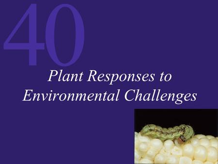 40 Plant Responses to Environmental Challenges. 40 Plant–Pathogen Interactions Pathogens have mechanisms for attacking plants, while plants have mechanical.