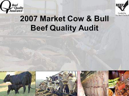 2007 Market Cow & Bull Beef Quality Audit. Beef Quality Assurance Mission Maximize consumer confidence in and acceptance of beef by focusing the industry's.