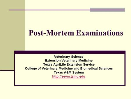 Post-Mortem Examinations Veterinary Science Extension Veterinary Medicine Texas AgriLife Extension Service College of Veterinary Medicine and Biomedical.