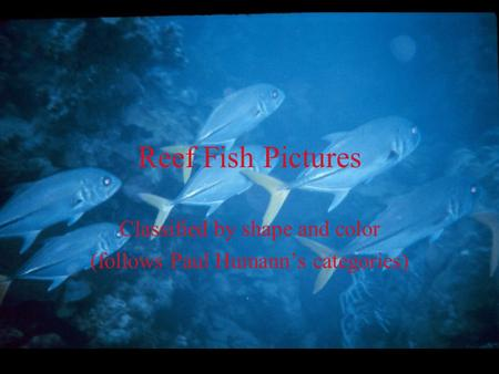 Reef Fish Pictures Classified by shape and color (follows Paul Humann's categories)