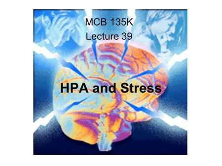 HPA and Stress MCB 135K Lecture 39. kidney adrenal Anterior pituitary Posterior pituitary hypothalamus glucocorticoids.
