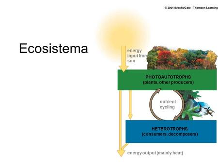 Ecosistema energy input from sun nutrient cycling PHOTOAUTOTROPHS (plants, other producers) HETEROTROPHS (consumers, decomposers) energy output (mainly.