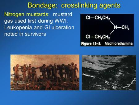 Nitrogen mustards: mustard gas used first during WWI. Leukopenia and GI ulceration noted in survivors Bondage: crosslinking agents.