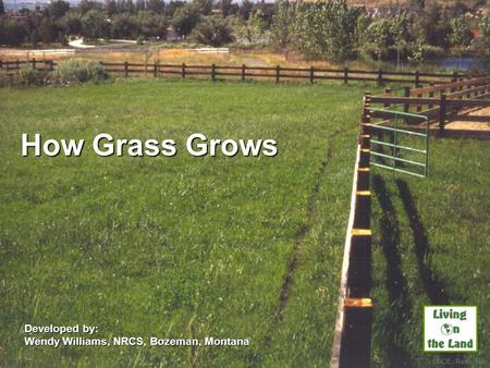 How Grass Grows Developed by: Wendy Williams, NRCS, Bozeman, Montana UNCE, Reno, Nev.