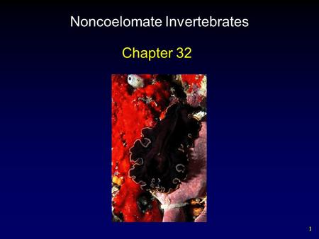 1 Noncoelomate Invertebrates Chapter 32. 2 Invertebrate Phylogeny Two Approaches – Traditional reconstructions are based on key aspects of body architecture.